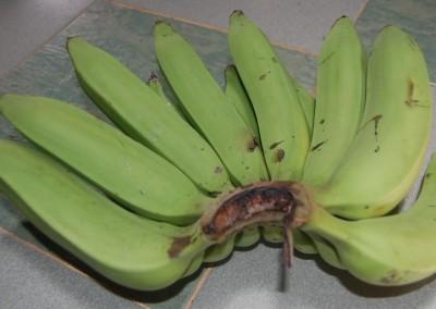 Banana Nangka